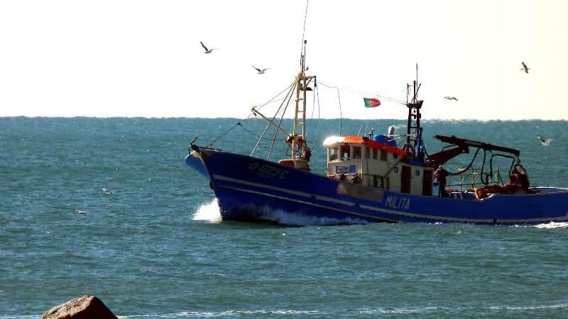 Pesca Barrento - Loja de Canas e Carretos e Tudo para Pesca